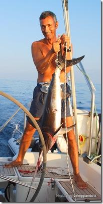 Pesce spada - Clicca per ingrandire